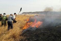 تالاب هامون در آتش سوخت