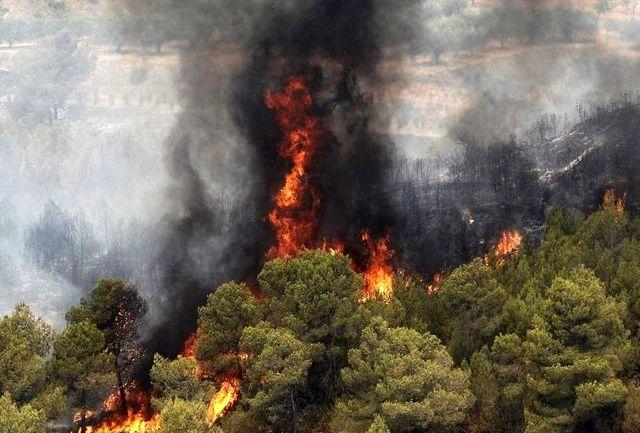 برای مقابله با آتش سوزی های احتمالی جنگل ها محیط زیست دست به کار شد