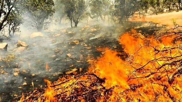 منطقه حفاظت شده بوزین و مرخیل پاوه همچنان در دام آتش