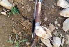 دستگیری متخلف شکار کبک در مناطق آزاد شهرستان دنا