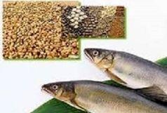 صدور 6900 تن خوراک آبزیان از استان