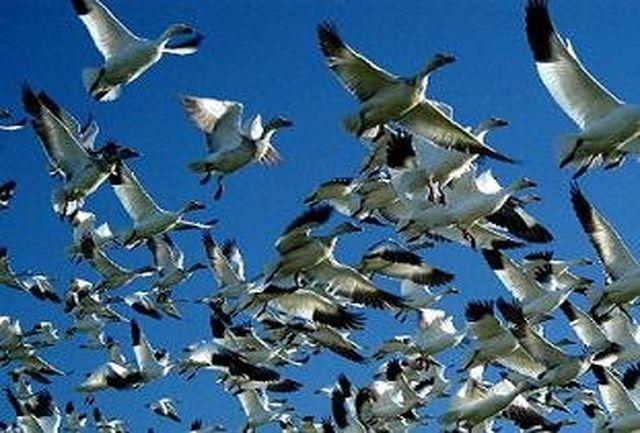 192 گونه از پرندگان در خطر انقراض هستند