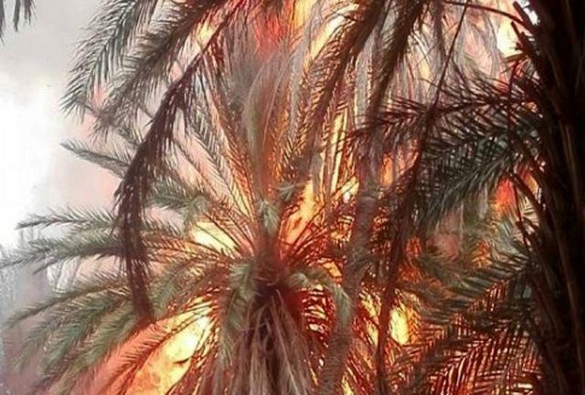 هزار اصله درخت خرما در آتش سوزی شهر گشت سراوان سوخت