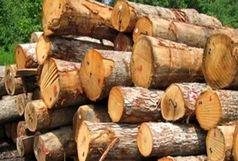 کشف 10 تن چوب قاچاق در املش