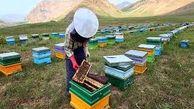 پیامد علمی شدن زنبورداری، ارزش افزوده در این صنعت است