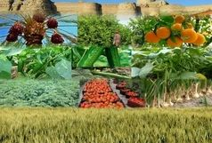 افزایش نرخ تورم تولیدکننده زراعی در زمستان ۹۹