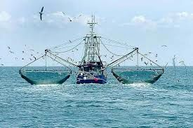 توقیف ۷ شناور به دلیل عدم رعایت فاصله تا ساحل و تخلف در صید آبزیان