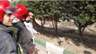 زنده گیری یک قلاده گرگ در کیانپارس اهواز+ببینید