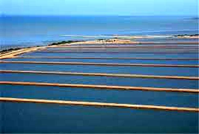 افزوده شدن ۹۰۰ هکتار اراضی ساحلی به ظرفیت پرورش میگو استان بوشهر