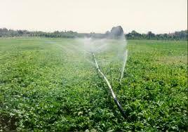 ۵۰ درصد کشت حبوبات در تایباد افزایش یافته است