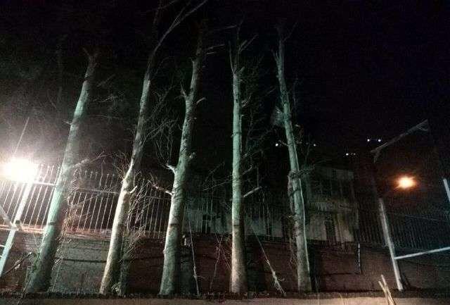 با پایش شبانه روزی مدیریت شهری؛ قطع کنندگان درختان الهیه بازداشت شدند