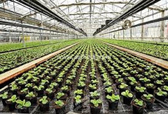 50 هکتار به مساحت محیط های کشت گلخانه ای زنجان اضافه می شود