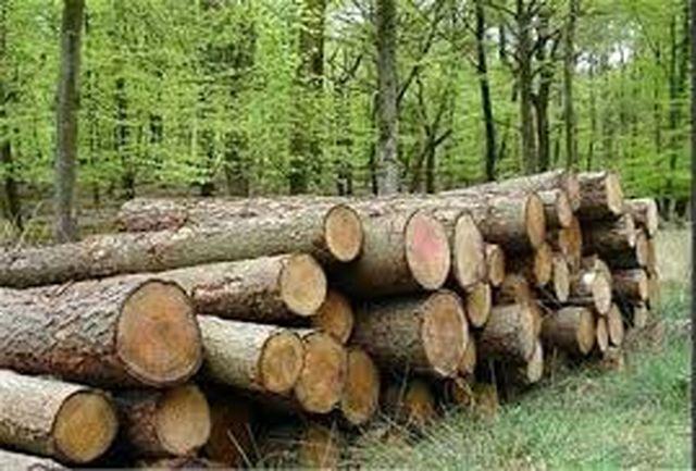 کشت ۱۱۰۰ هکتار زراعت چوب  در لرستان
