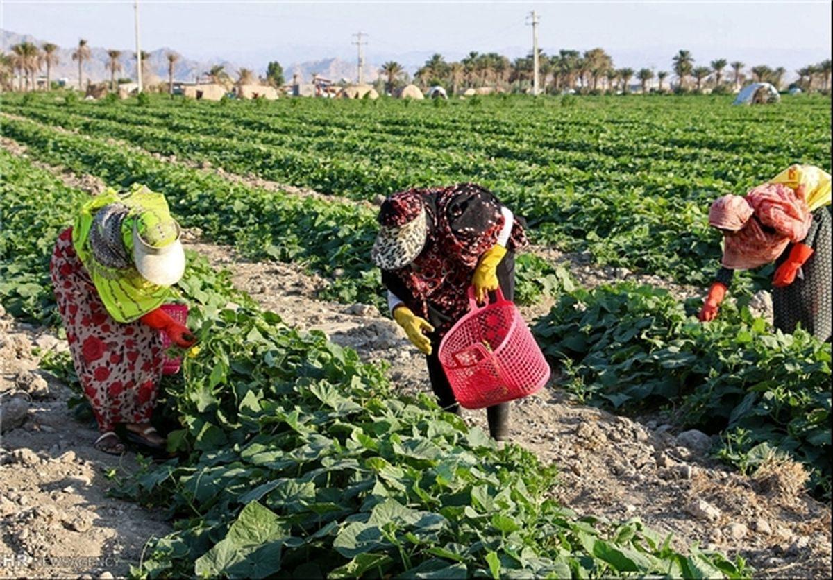 تشکیل ۴۵ صندوق خُرد زنان روستایی عشایری در چهارمحال و بختیاری