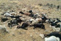 صاعقه 96 راس گوسفند را در ایلام تلف کرد