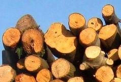 کشف 4 تن چوب قاچاق در بخش سنگر