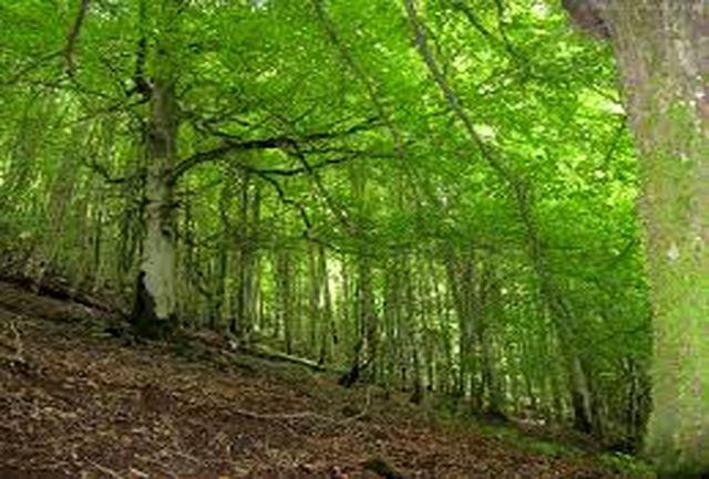 زیباترین و بزرگ ترین پارک های جنگلی کشور