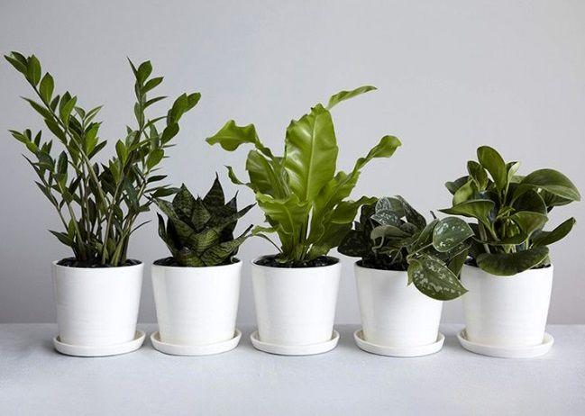 با نگهداری از این گیاه در خانه سلامتی خود را تضمین کنید