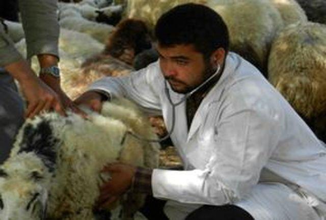 نظارت اداره دامپزشکی امیدیه بر تمامی کشتارگاه ها و عرضه فرآوردههای گوشتی و دامی
