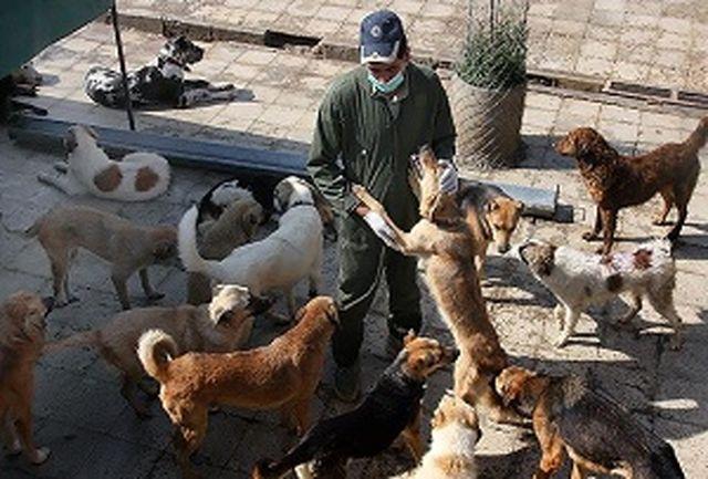شهرداری تهران با سگهای ولگرد چه میکند؟