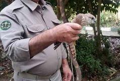 تخریب بیش از 200 مورد تله شکار غیرمجاز