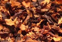 کشف تنباکوی تاریخ مصرف گذشته در سرخه
