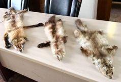 کشف اجزای تاکسیدرمی شده حیوانات وحشی از مغازه ای در شهر تهران