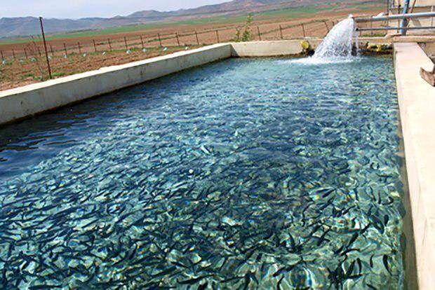 رهاسازی یک میلیون قطعه لارو ماهی در منابع آبی شهرستان فنوج