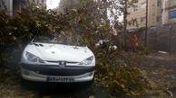 سقوط درخت بر روی 2 خودرو سواری در رشت