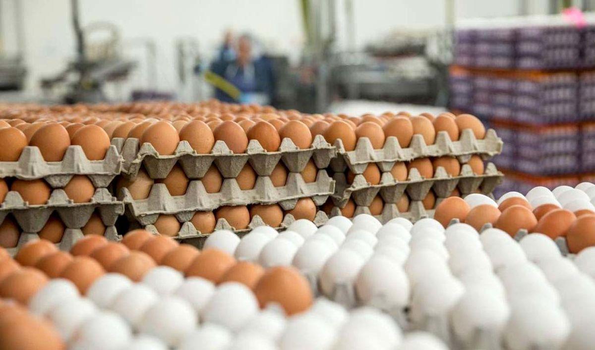 شهروندان فقط تخممرغ نگهداری شده در یخچال را بخرند!