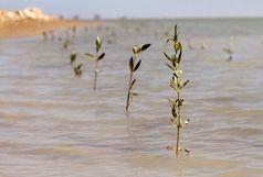 کاشت 10 هزار نهال حرا در ساحل بندرعباس