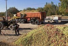 قیمت خرید تضمینی سیب درختی درجه سه در نهاوند 14 هزار و 608 ریال شد