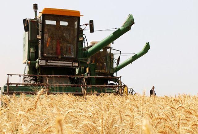 پیش بینی برداشت ۴۰ هزار تن گندم از مزارع کشاورزی شادگان