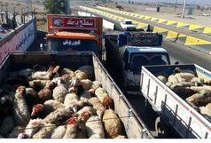 صدور مجوز حمل 137 هزار رأس دام زنده از خراسان شمالی به مقصد دیگر استان ها