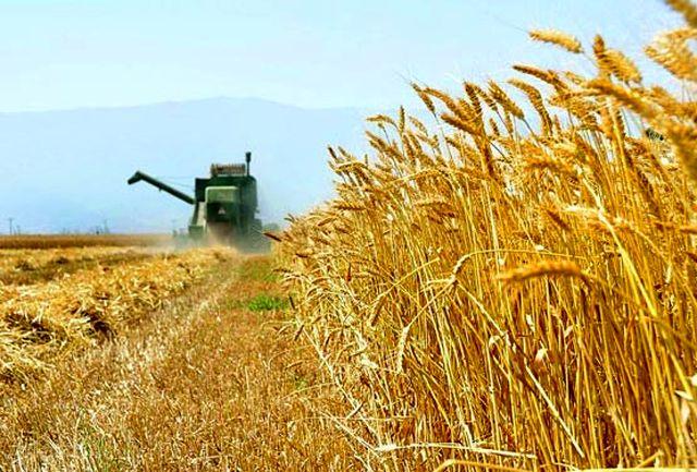 تمدید مهلت بیمه 5 محصول کشاورزی درگیلان