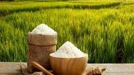 افزایش ۸ درصدی تولید بذر خام برنج در سال ۱۴۰۰