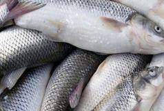 توقیف ۳۵۰۰ قطعه ماهی قاچاق و کشف ۲۹ تن کودشیمیایی در بهار