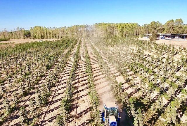 طرح زراعت چوب در استان قزوین اجرایی می شود