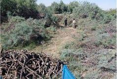 دستگیری متخلفان قطع اشجار در حوزه تالاب قره قشلاق