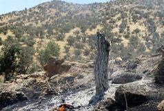 مهار آتش سوزی جنگل های کوه نیر در کهگیلویه و بویراحمد