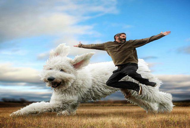 سگی که ستاره اینستاگرام شد