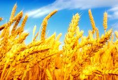 ۳ هزار میلیارد برای تقویت صندوق بیمه محصولات کشاورزی اختصاص یافت
