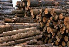 کشف 15 تن چوب جنگلی قاچاق در رضوانشهر