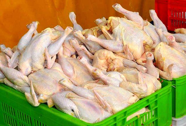 قیمت مرغ حتما گران خواهد شد