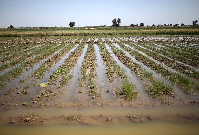 سیل به بیش از۴ هزارهکتار از اراضی کشاورزی آذربایجان غربی خسارت زد