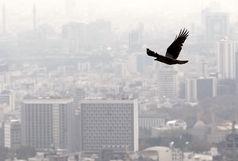 آلودگی هوا ۲۰۰۰ بیمار را به اورژانس کشاند