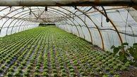 تحقق ۹۴ درصدی برنامه احداث گلخانه ها و محیط های کنترل شده در سال ۹۹