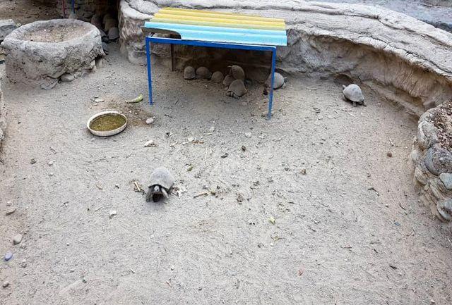 خاکهایی که لاکپشتها را زمینگیر کردند/ لاکپشتهای ساعی در چنگال تماشاچیان اسیرند/ حال و روز متفاوت حیوانات در پارک ساعی