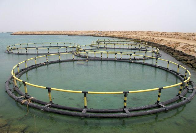 پرورش ماهی در قفس از ظرفیت های ویژه سرمایه گذاری در ایلام است