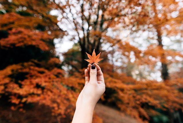 12 بیماری که در فصل پاییز اوج میگیرند